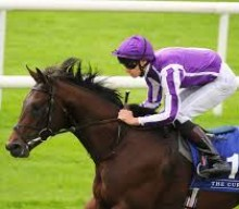 Qipco 2000 Guineas – The Contenders