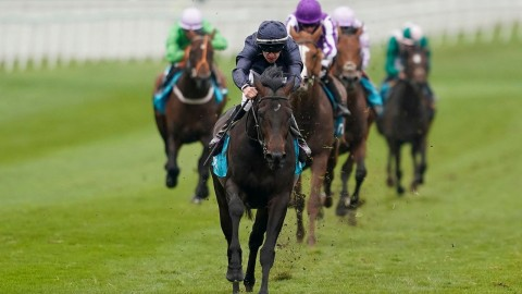 Sir Dragonet Slashed In Derby Betting