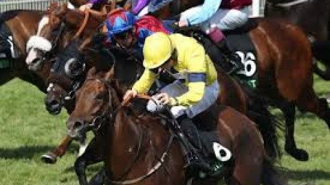 York tips – Thursday 16th May