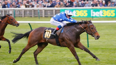 Irish 1,000 Guineas – The Contenders