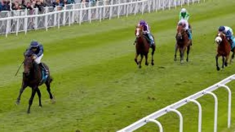 Epsom selections – Saturday 1st June