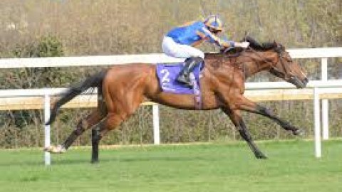 Curragh and Newcastle selections – Saturday 29th June