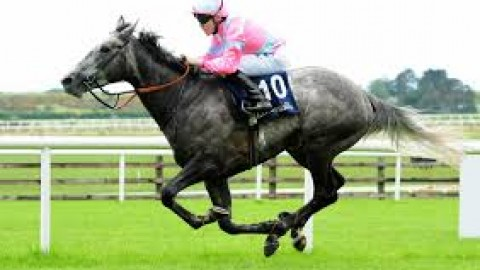 Galway & Goodwood selections – Wednesday 31st July