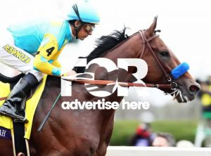 Advertise here (image is American Pharoe who won the US Breeders Cup in 2015)
