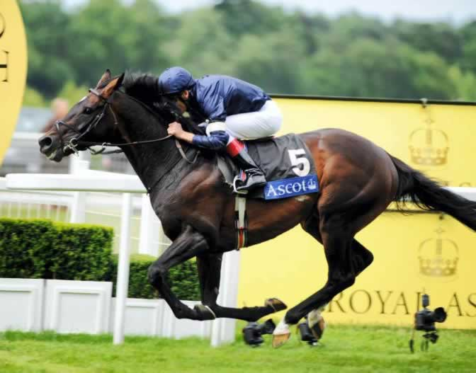 Yeats wins the Gold Cup at Royal Ascot 4 times